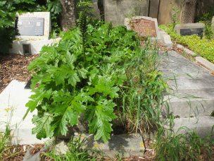 Samuel Cooke's grave - before photo
